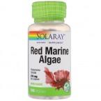 الطحالب البحرية الحمراء